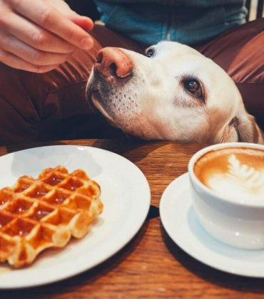Restaurantes Dog Friendly: 8 espaços no Porto que não deixam o teu amigo patudo de fora!